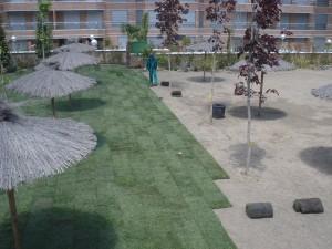 Plantación tepe en Majadahonda