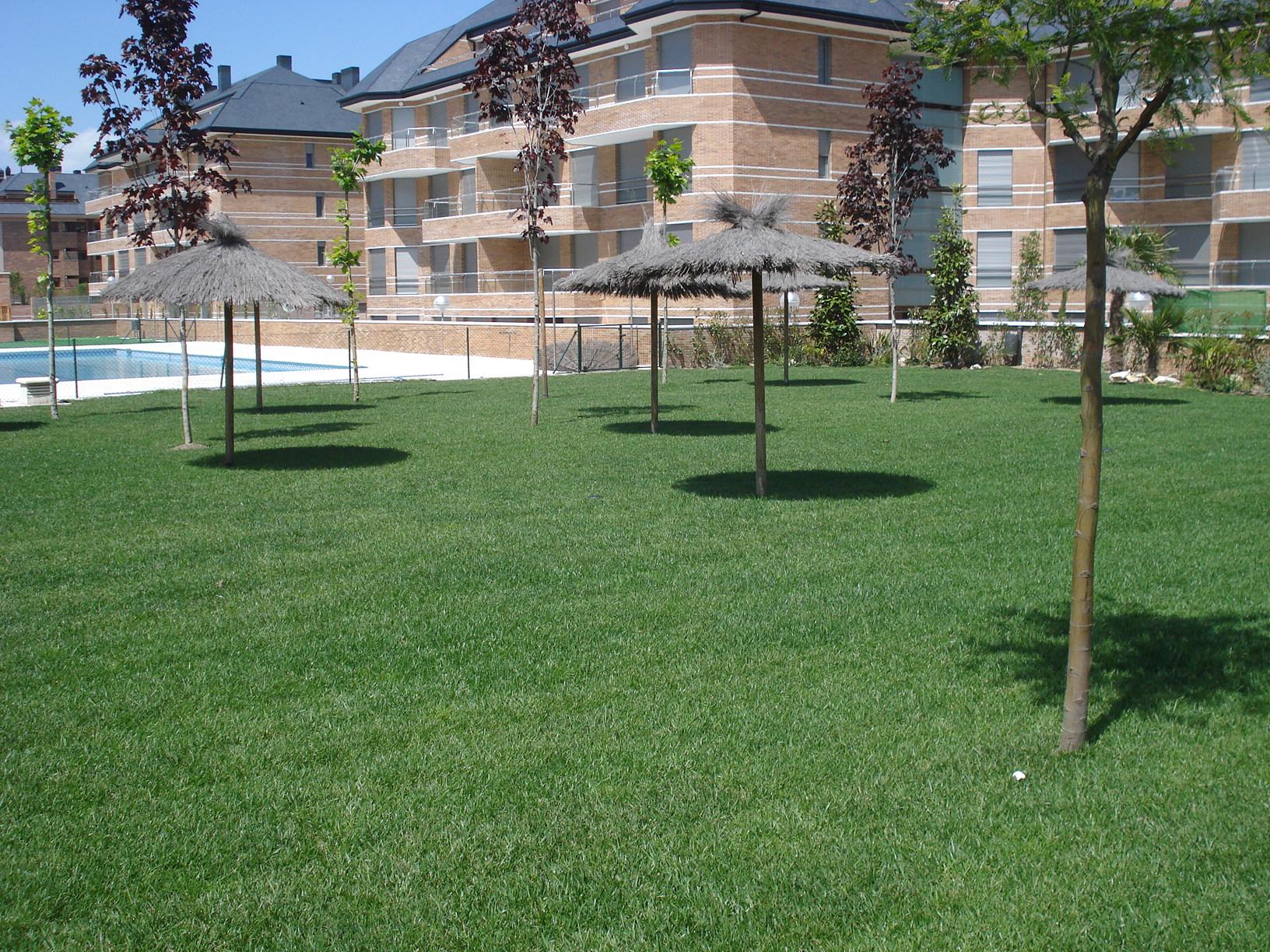 Pradera de tepe terminada en jardin Majadahonda, Madrid