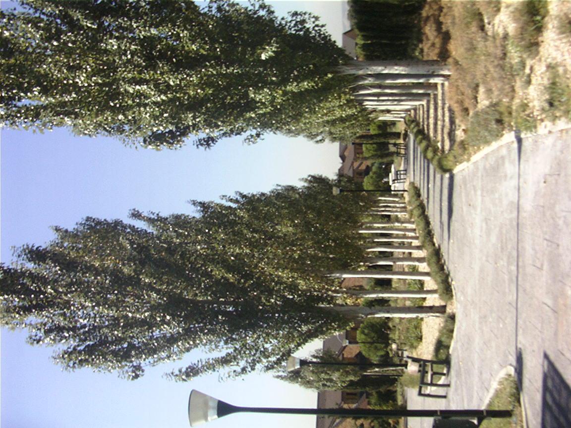 Mantenimiento Jardines Sanyres Centros Para Mayores Las
