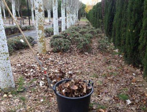 Limpieza de hojas en parcela y jardin de Torrelodones, Madrid