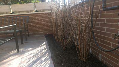Impermeabilización y mejora de Jardinera en terraza. Mirasierra, Madrid.